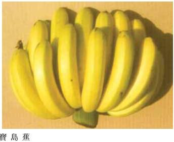 寶島蕉/新北蕉