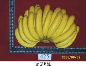 台蕉6號/玉豐