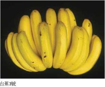 台蕉3號/豐年