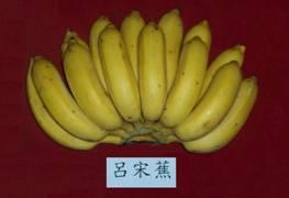 呂宋蕉/日本蕉/南洋蕉/粉蕉
