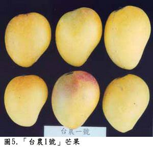 台農1號/香水芒果