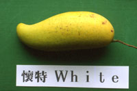 懷特/香蕉檨/竹葉檨