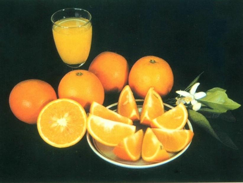 柳丁/柳橙